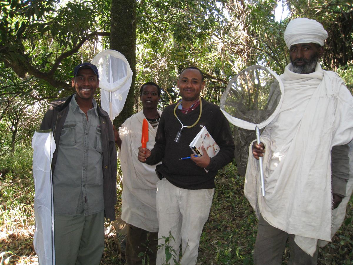 04_First-insect-survey-in-Ethiopian-church-forest