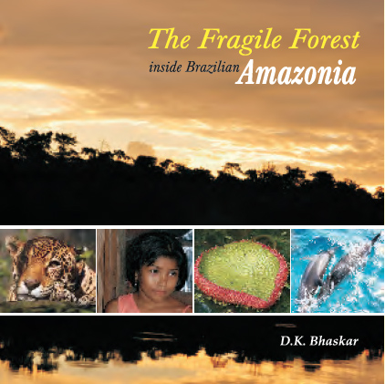 fragileforest_bookcover