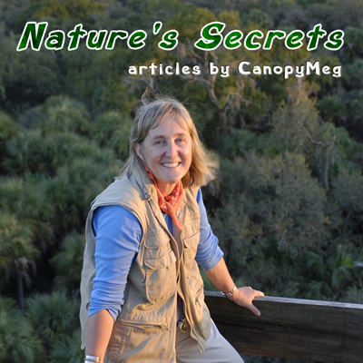 Nature's Secrets by CanopyMeg