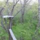 Williams College canopy walkway